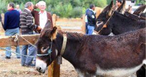 Feria anual de ganado caballar de Bravos de Ourol
