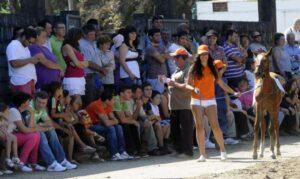 Feria anual del caballo de Meis